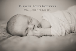 charlotte nc newborn photography session